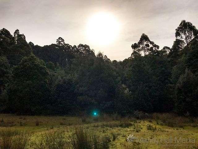 Bush near Port Arthur, complete with ghost orb