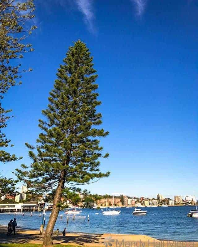 Sunny afternoon in Manly