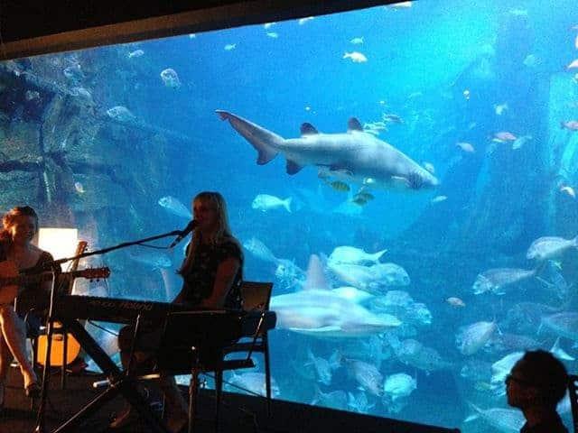 Gig at Melbourne Aquarium