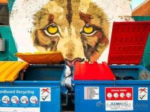 Lion with the bins