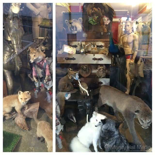 Strange wonky stuffed animals in a shop front