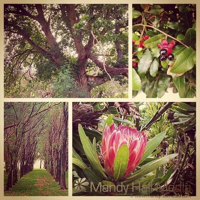 Flowers and trees that I've seen in the last month across Australia