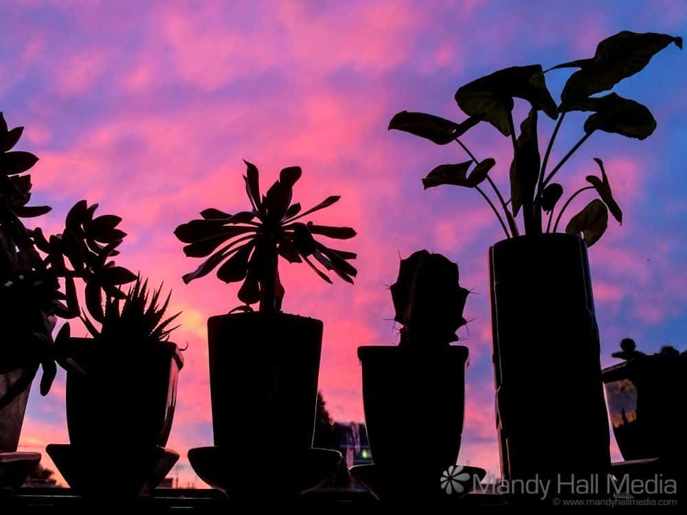 Brilliant sunset through the plants on the windowsill