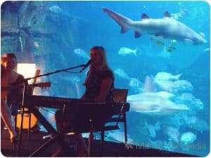Gig at the Aquarium. Big sharks