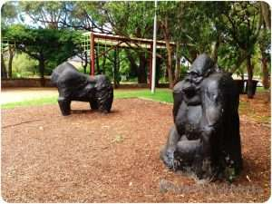 Banks Park, Sydney. Gorillas