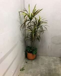 Unexpected plant in the stairwell