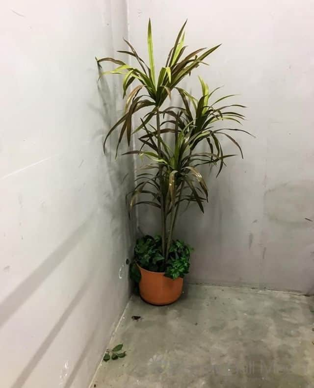 Unexpected plant in the stairwell⁠