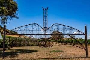 Crazy Dragonfly by Moz Moersi at Art in the Vines at Hanging Rock Winery