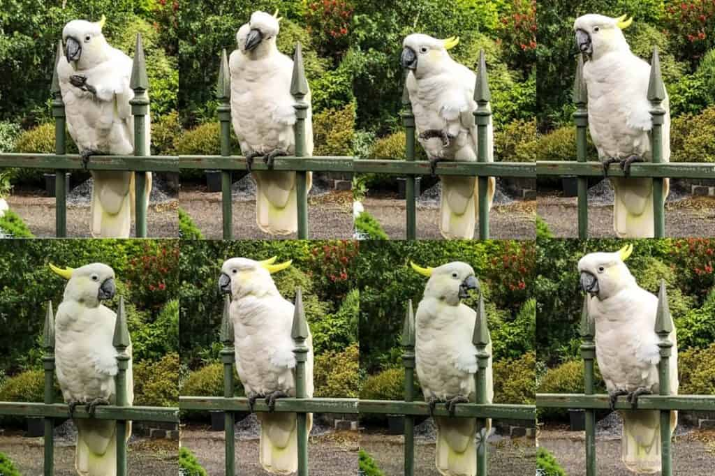 Cockatoo photoshoot