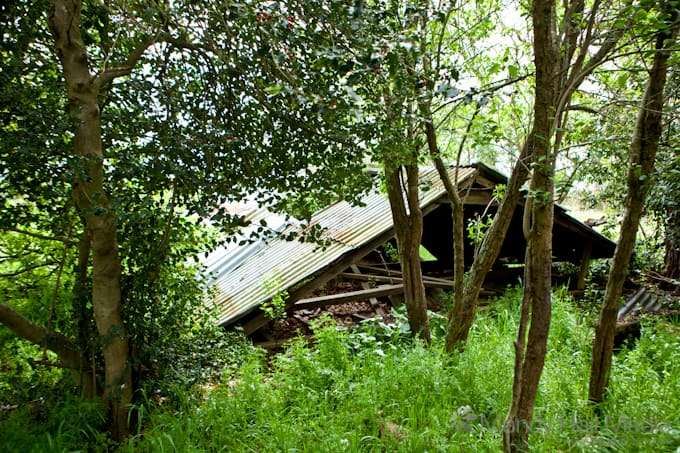 Remains of an old shed