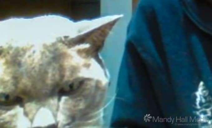 Grumpy Skype cat