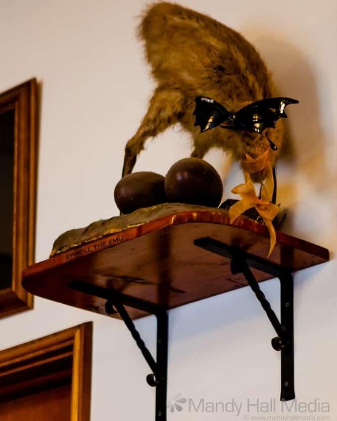 Errol the Emu