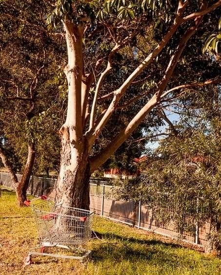 Trolley under a tree