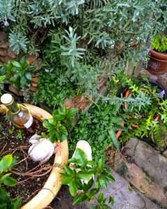 Garden washed clean by the rain