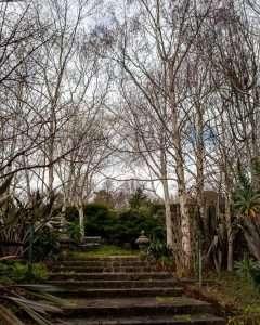 Stairway in a garden