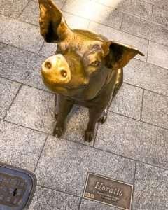 Horatio the pig