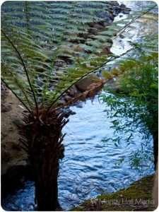 Fern and creek