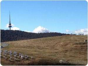 Canberra arboretum with Black Mountain Tower in the background
