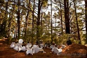 Toilet graveyard in a pine forest