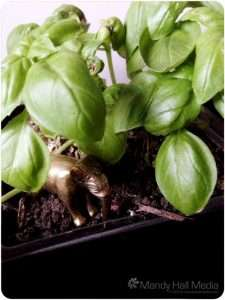 Elephant is going on an adventure in the basil