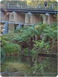 The bridge at the Australian Emergency Management Institute