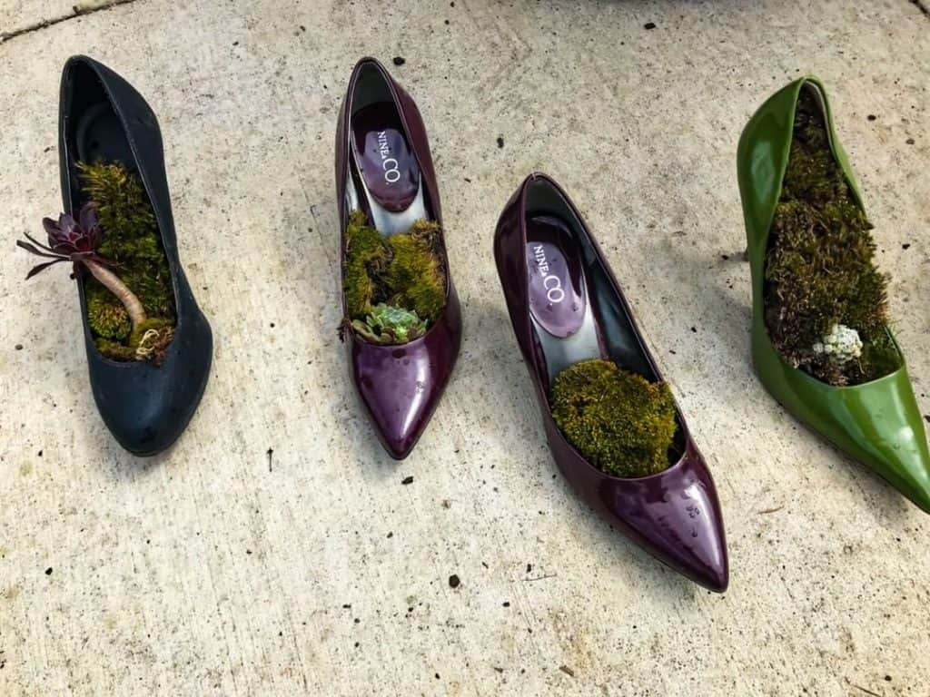 Succulents in shoes at the nursery