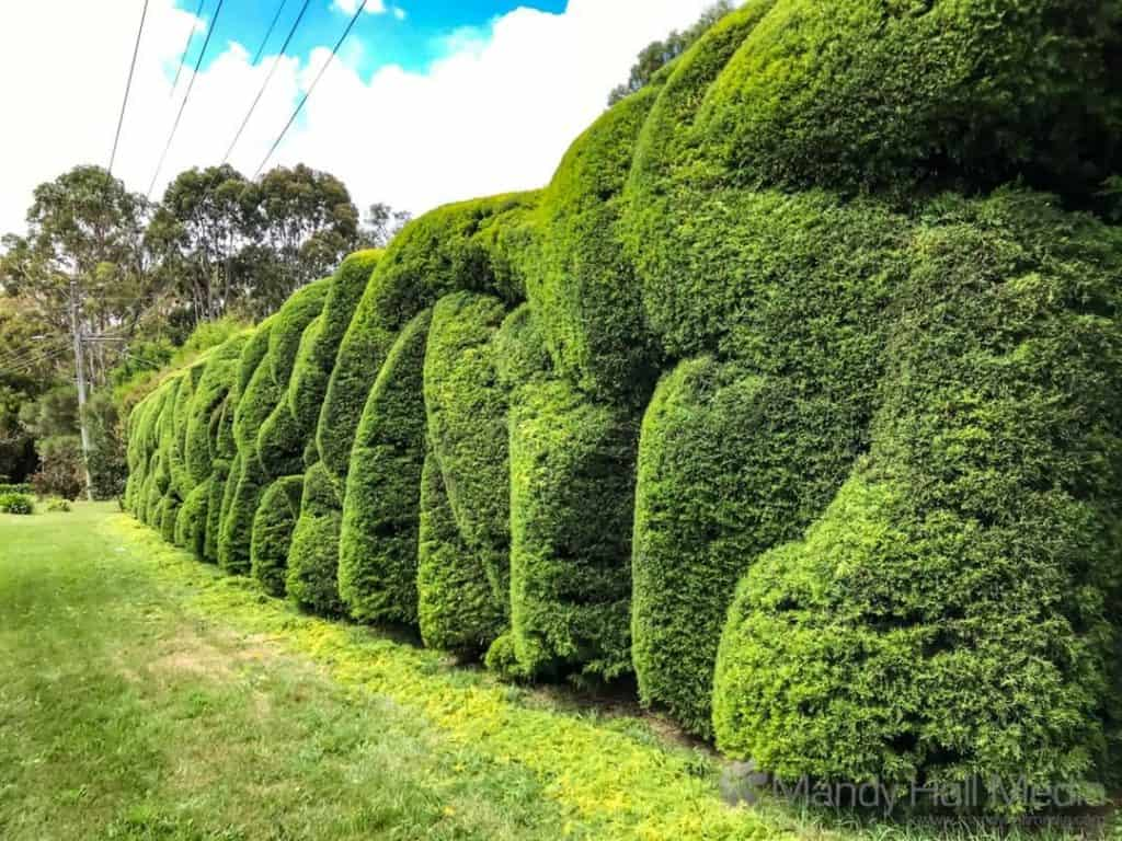 Weird hedge