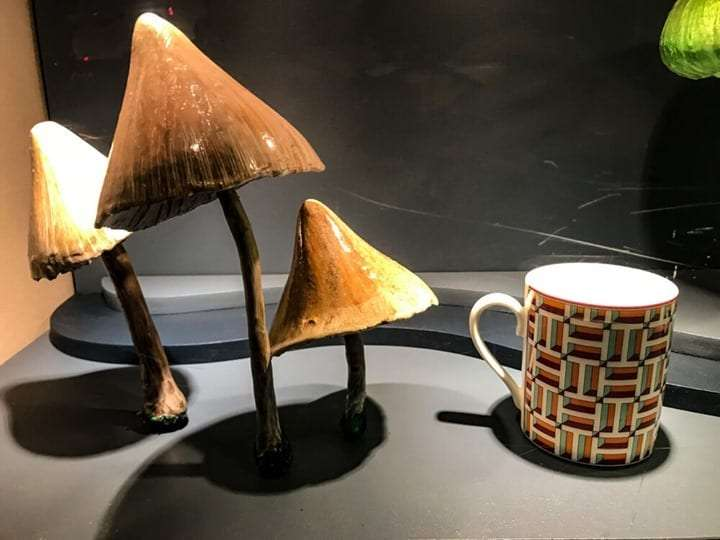 Toadstools and coffee cups