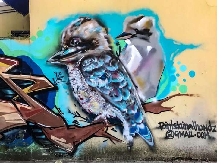 Kookaburras on the wall
