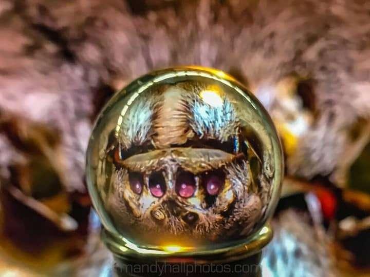 Spider eyes through a lens ball
